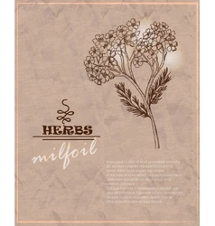 Vintage background with milfoil on old paper vector image