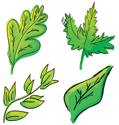 drawn colored green leaves on white vector image