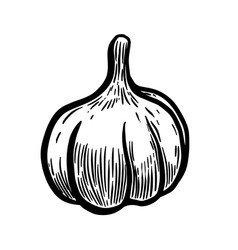 hand drawn garlic design elements for poster vector image vector image