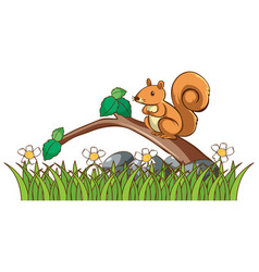 isolated picture squirrel in garden vector image