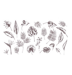 Set of exotic leaves of different plants hand vector