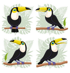toucans birds on branches vector image