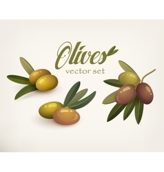 Set of olive branches with stems and leaves vector image vector image