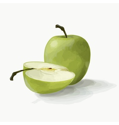 beautiful green apples vector image