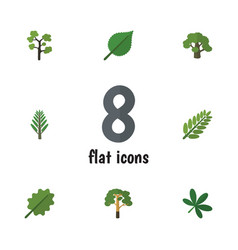flat icon bio set of jungle tree alder and other vector image