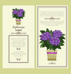 hydrangea flower in pot banners vector image