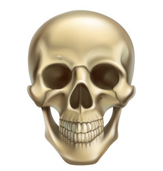 skull 3d realistic icon vector image