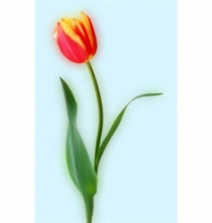 Yellow and red tulips vector