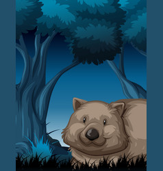 a wombat in dark forest vector image