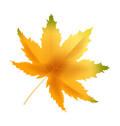banner autumn leaf template background yellow and vector image