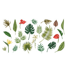 collection of tropical leaves of various plants vector image