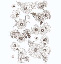 garden flowers drawing set isolated wild vector image
