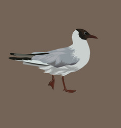 hand drawn seagull isolated vector image