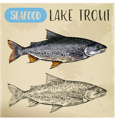 Lake or white trout sketch sea or ocean fish vector