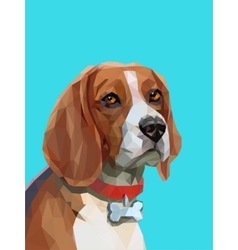 Low poly portrait of beagle dog vector image vector image