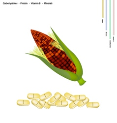 Purple Corn Seed with Vitamin B and Minerals vector