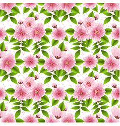 sakura flower seamless pattern vector image