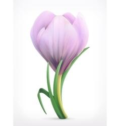Snowdrop spring flower vector image vector image
