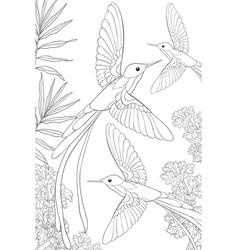 Adult coloring bookpage a group hummingbirds vector