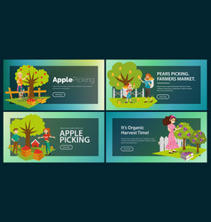 Apples pears plums picking flat set vector