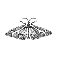 butterfly or wild moths insects dysschema vector image