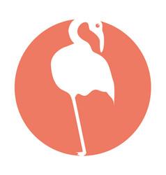 Exotic flamingo silhouette icon vector