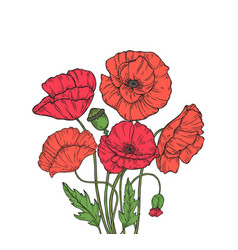 poppy bouquet red poppies flower meadow garden vector image