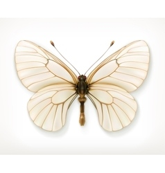 White butterfly icon vector