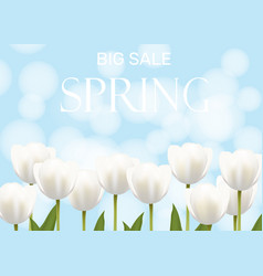 spring sale with white flowers vector image