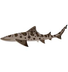 Leopard shark isolated on vector