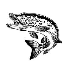 Pike fish monochrome concept vector