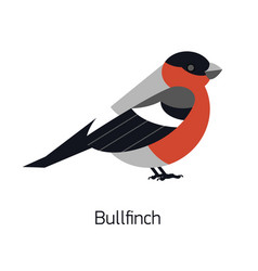 bullfinch isolated on white background cute vector image