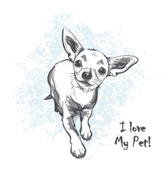 Funny smooth-haired chihuahua vector