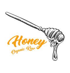 Honey spoon isolated sketch with honey drop flow vector