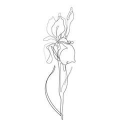 iris one line drawing vector image