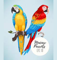 Tropical parrots collection vector
