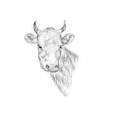 Sketch Head of a cow Hand drawn vector image