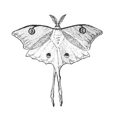butterfly or wild luna moths insects mystical vector image