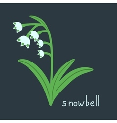 Snowbell plant vector