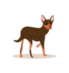 a small chihuah stands and bent by one paw vector image