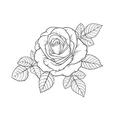 Beautiful black and white rose and leaves floral vector