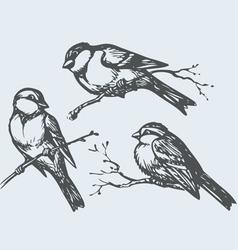 Birds on branches vector
