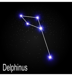 Delphinus Constellation with Beautiful Bright vector image