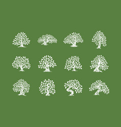 Huge and sacred oak tree plant silhouette logo vector