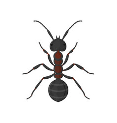Large worker ant top view isolated on white vector