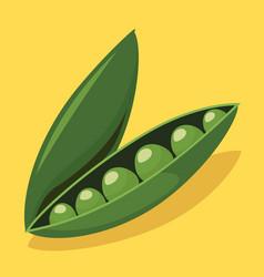 pea vegetable vector image