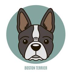 portrait boston terrier vector image