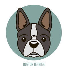 Portrait of boston terrier vector