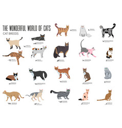 Breed cats brochure cards set animal traditional vector