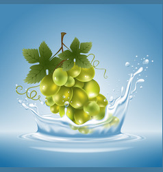 grape in water splash vector image